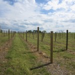 new 8 chains north winery vineyard in purcellville