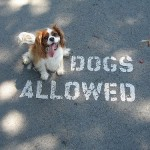 dogs allowed at the winery