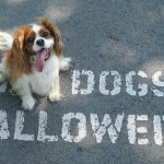 dogs_allowed_540x360