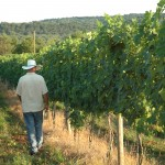 8 chains north winery owner Ben in vineyard