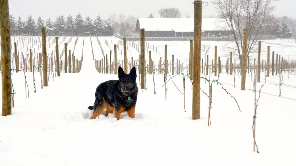yaeger in the snow