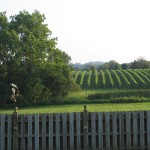 waterford vineyard at 8 chains north winery
