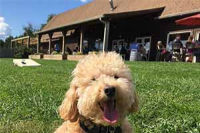 dog-friendly winery